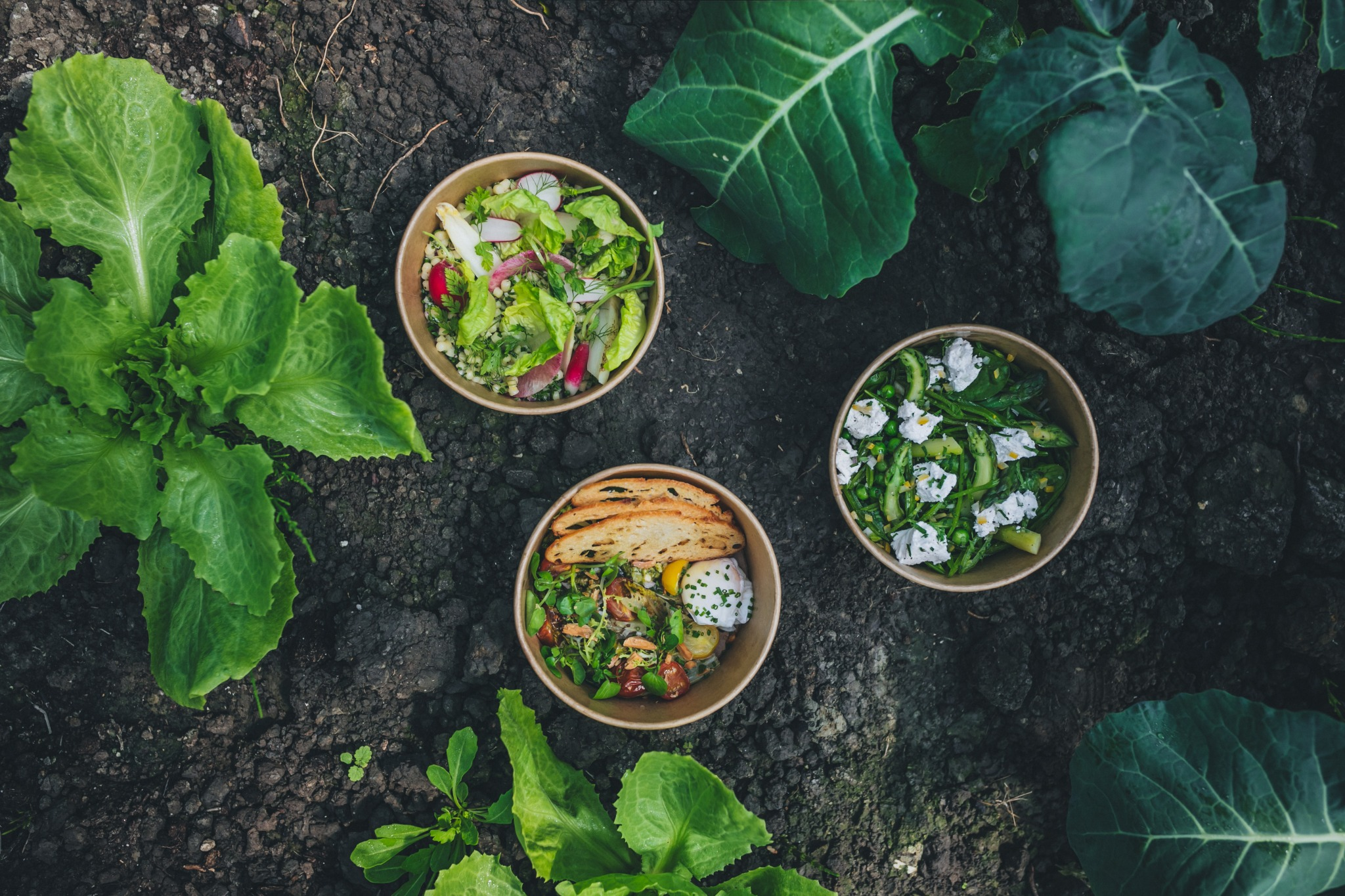 Delicious and organic salads