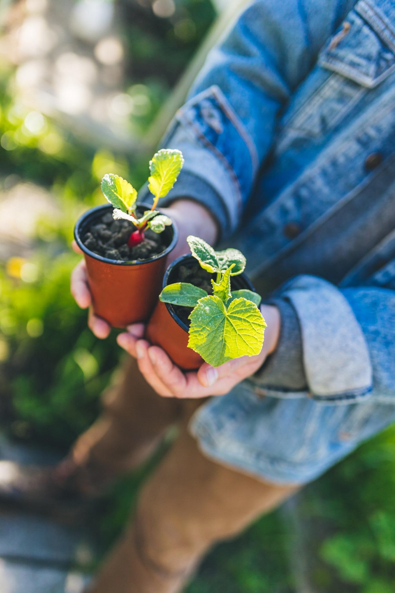 jonge plantjes