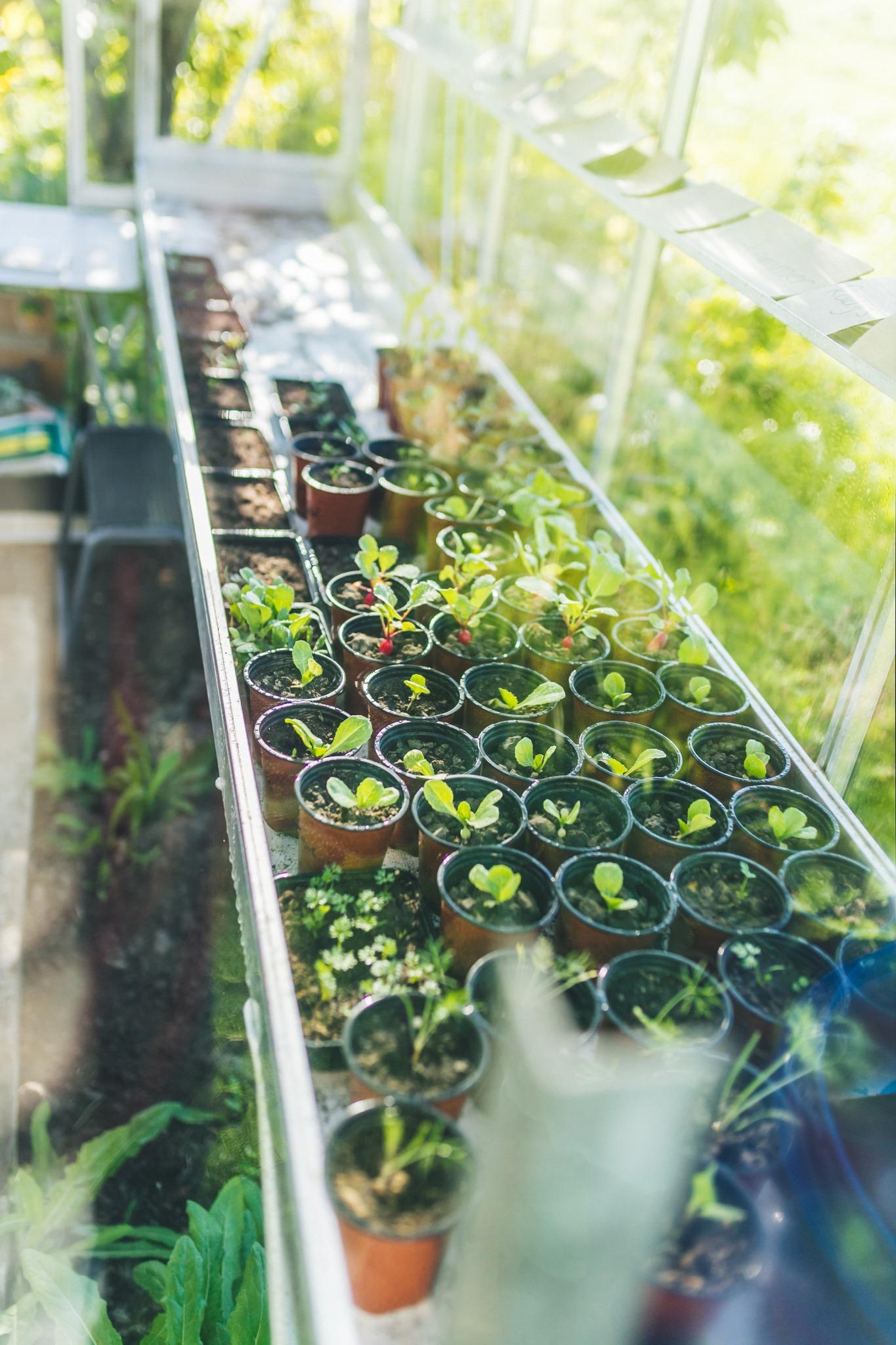 de kas vol met planten